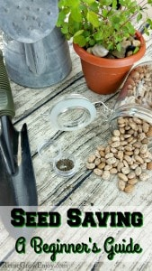 Different types of seeds on a wood looking background. Text overlay at the bottom that sats Seed Saving - A Beginner's Guide
