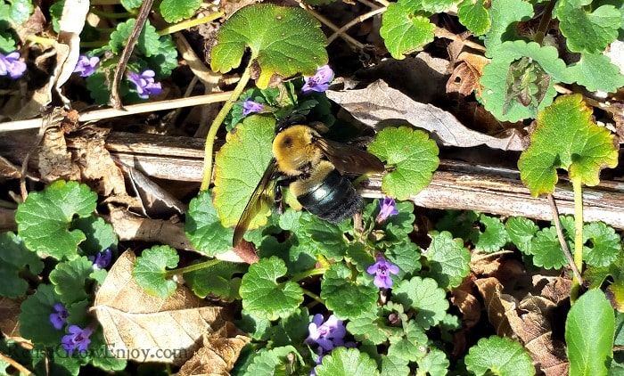 Should Not Kill Bees