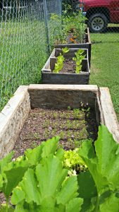 Three raised garden beds with plants growing in them