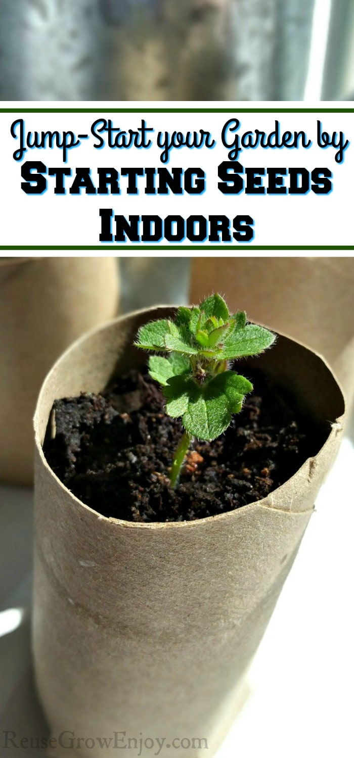 """Three small green plants growing in cardboard tubes in front of a indoor window. Text overlay that says """"Jump-Start your Garden by Starting Seeds Indoors""""."""