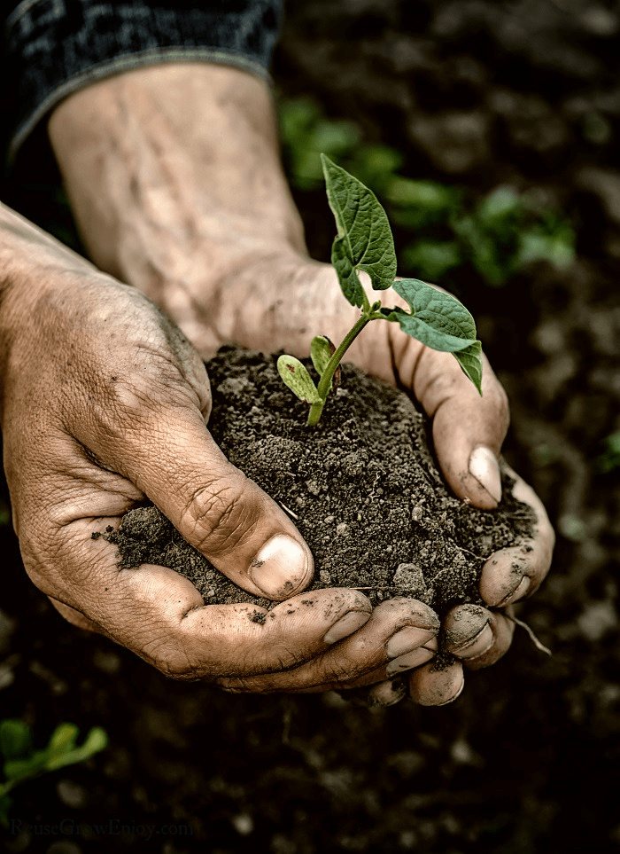 Hands holding soil and small plant.
