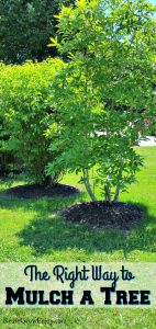 The Right Way to Mulch a Tree