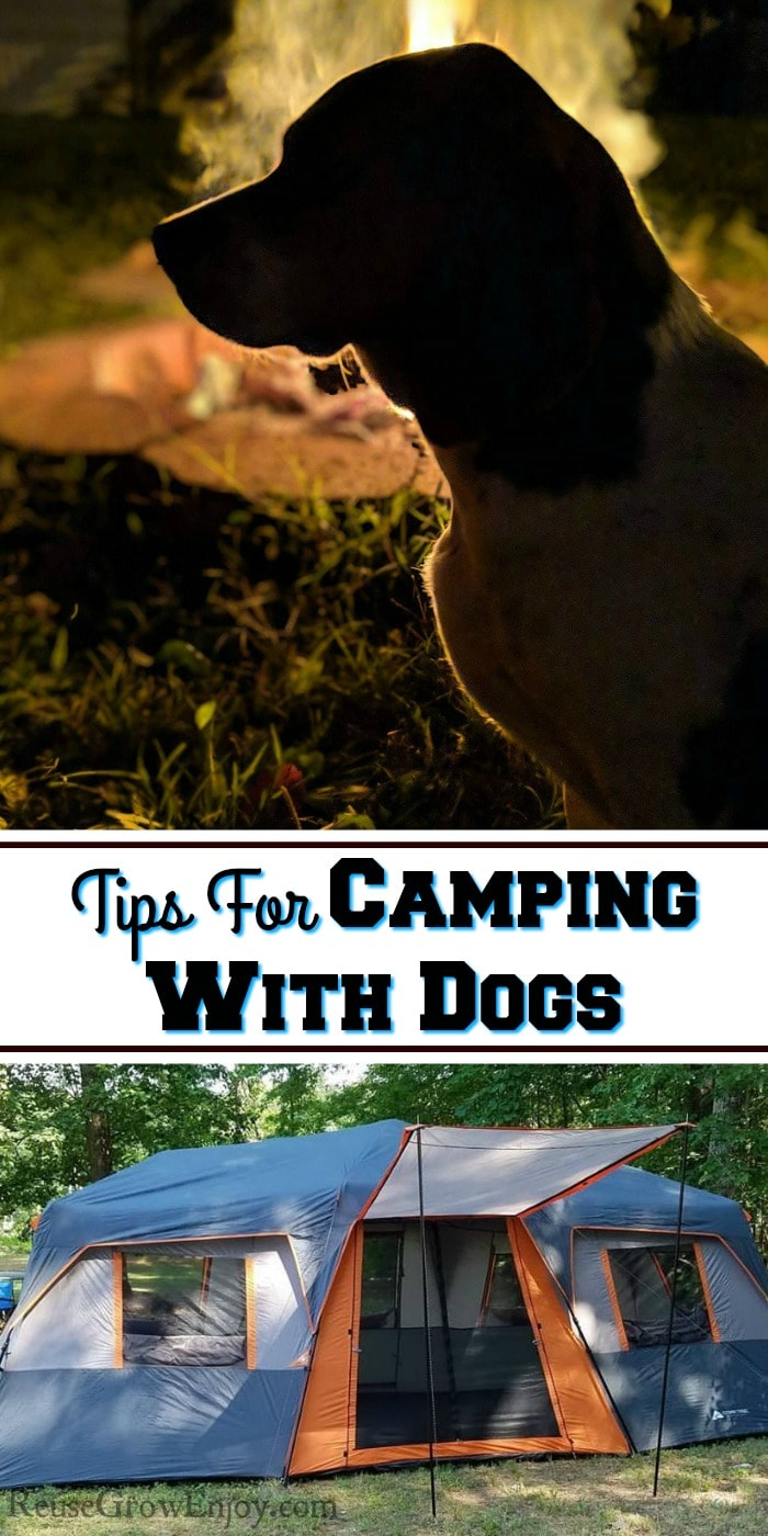 "short leg beagle sitting in the dark in front of a campfire. Text overlay that says ""Tips For Camping With Dogs"". At the bottom there is a large family tent."