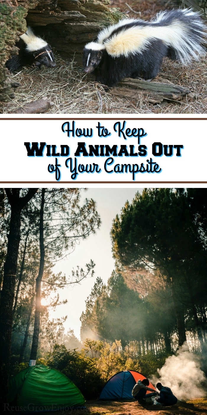 Campsite at the bottom and a skunk at the top. Middle has text overlay that says How To Keep Wild Animals Out Of Your Campsite