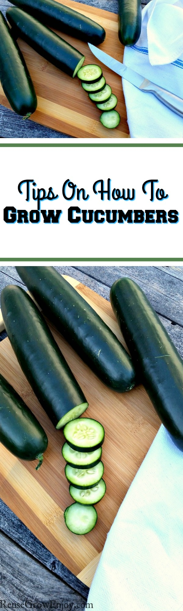 "When one thinks of gardens and growing food in the summer, many minds instantly think ""grow cucumbers"". But what if you don't know how to grow cucumbers? If that is the case, I am going to share a few great cucumber growing tips with you."