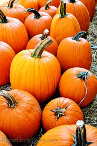 Tips On How To Grow Pumpkins
