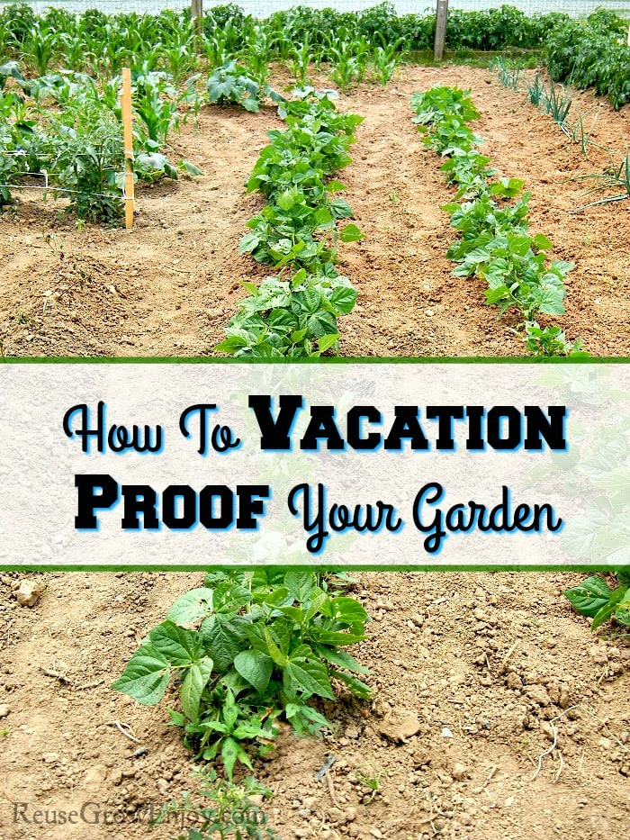 Want to take a vacation but worried because you have a garden? Check out these tips on how to vacation proof your garden!