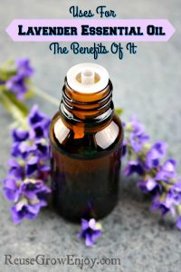 Uses For Lavender Essential Oil & The Benefits Of It