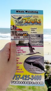 Hand holding a flyer for Virginia Beach whale watching tour with the beach in the background.