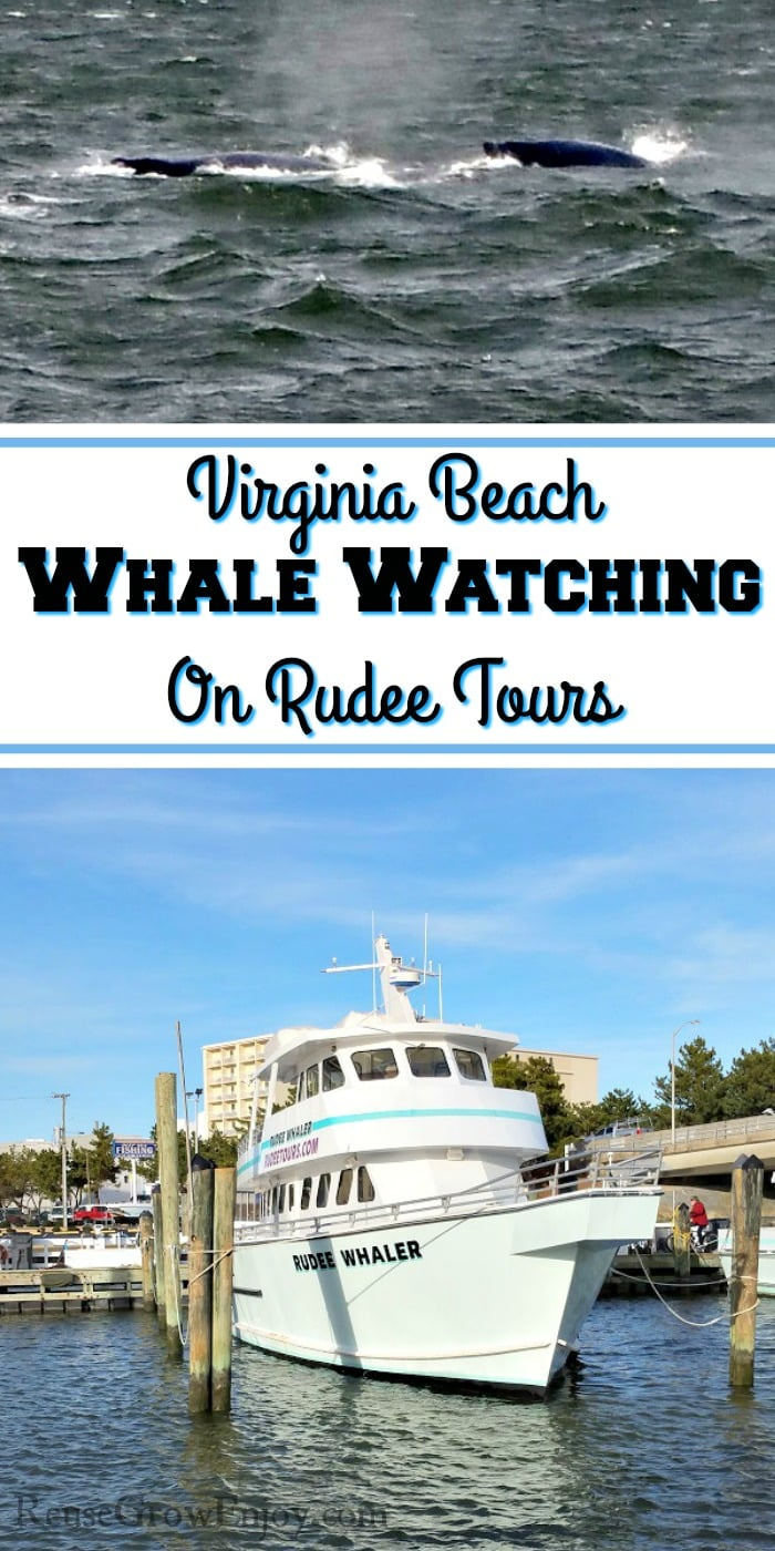 Whale tour boat at bottom. Two whales just coming out of water at the top. In the middle is a text overlay that says Virginia Beach Whale Watching On Rudee Tours.