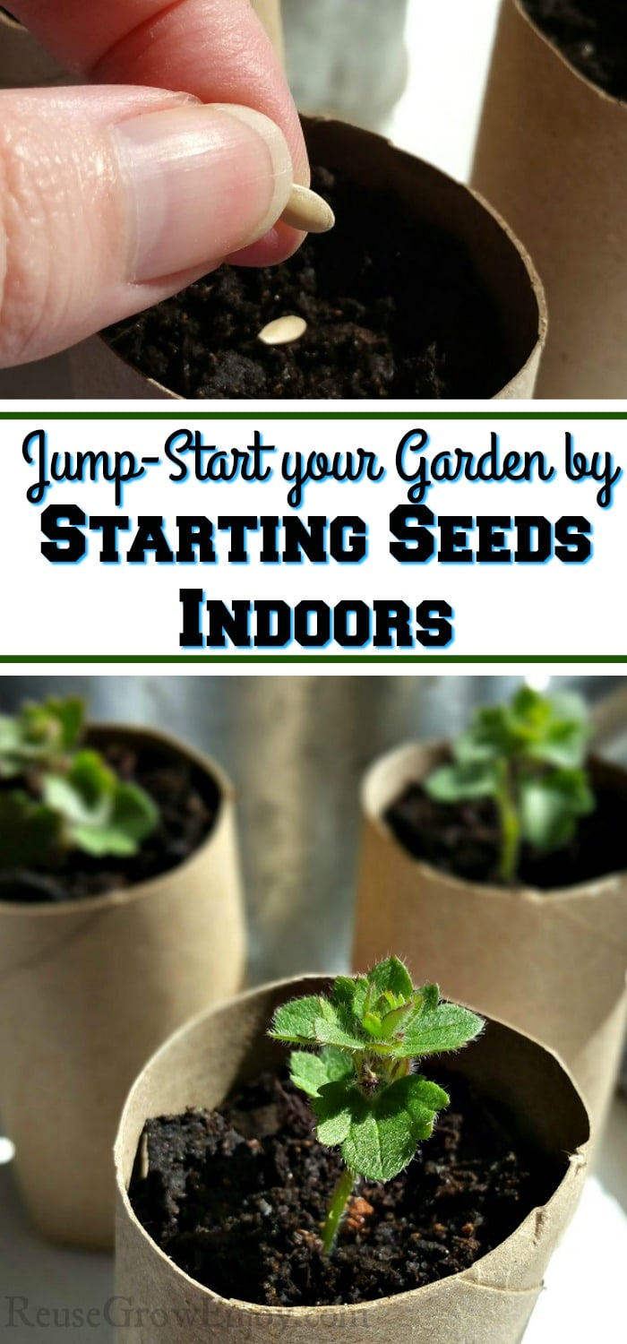 """Top is a hand planting seeds in dirt that is in a cardboard tube. Bottom is three small plants growing in cardboard tubes. Middle has a text overlay that says """"Jump-Start your Garden by Starting Seeds Indoors""""."""