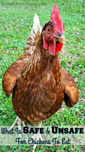 What Can Chickens Eat? Things That Are Safe & Unsafe