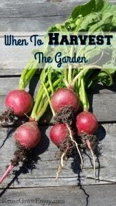 When To Harvest The Garden