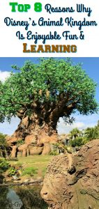 Top 8 Reasons Why Disney's Animal Kingdom Is Perfect Fun For The Family & Learning