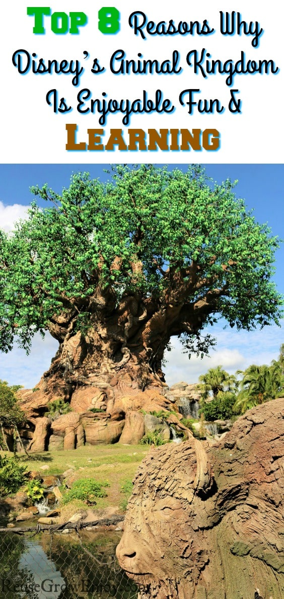 Looking for somewhere enjoyable to take the family? Check out these top 8 reasons Why Disney's Animal Kingdom Is Perfect Fun For The Family & Learning!