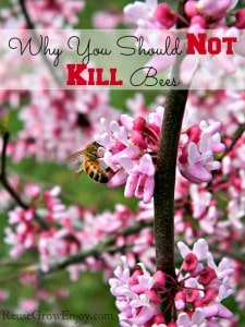 Why You Should Not Kill Bees