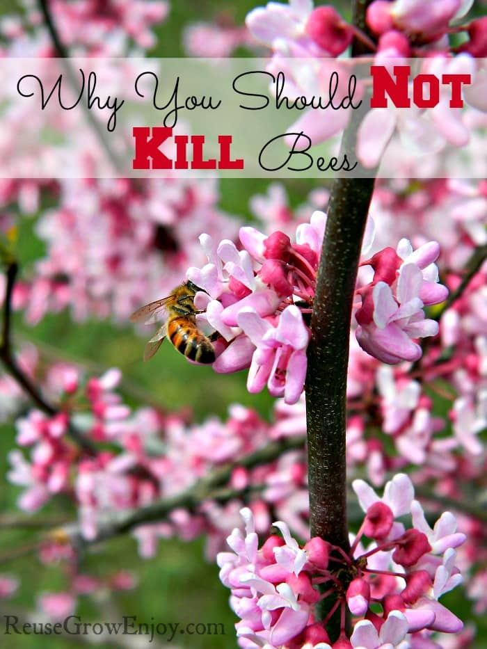 Why You Should Not Kill Bees. Bees play a very important roll in life. Find out why you should not kill them, why they are in trouble and what you can do to help.