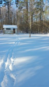 Winter camping with tracks in the snow with an old small shed in the back right in front of the woods.