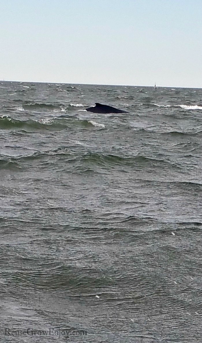 Back of a whale just above the water.