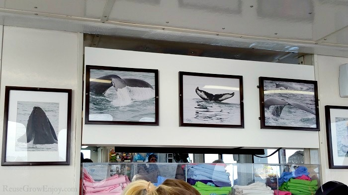 Whale pictures hanging above tee shirts for sale in the cabin of the boat.